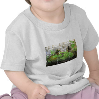 Nature is Water, Water is Nature T-shirts