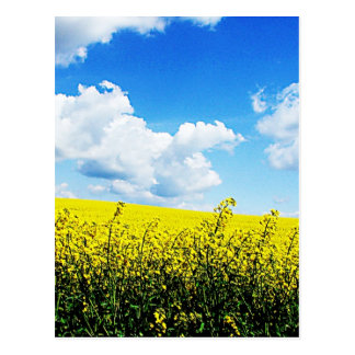 Nature landscape Sky farms Flowers Yellow Bright H Postcard