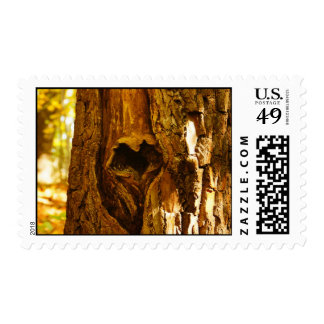 Nature Lover Stamps & Cards