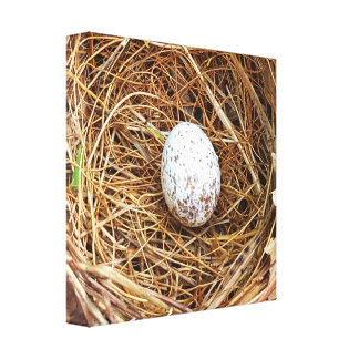 Nature Lovers Cardinal Bird Egg Nest Canvas Print