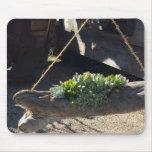 Nature Lovers Mousepad Succulents in Garden