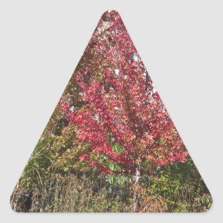 Nature Loves Flowers Trees Green fall Season color Triangle Sticker