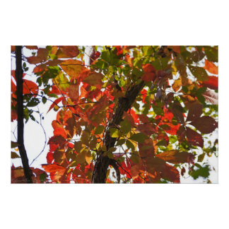 Nature Paints With Colorful Autumn Leaves Poster