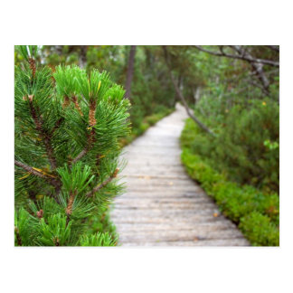 Nature Path Postcard