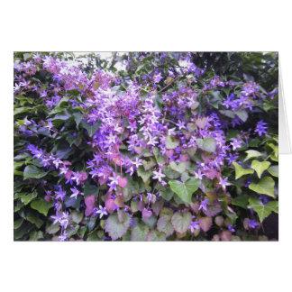 Nature Photo Card Purple / Mauve Hedge Flowers