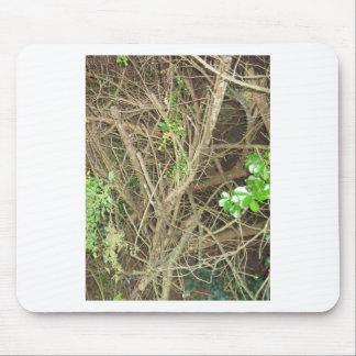 Nature Photo  CherryHill NewJersey America NVN664 Mouse Pad