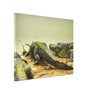 Nature Photo - Gators Going for a Dip Canvas Print