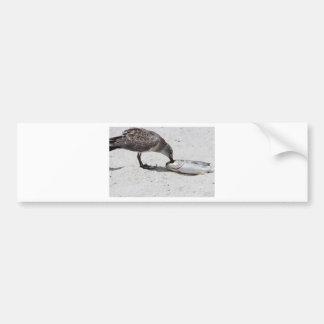 Nature Photo of Bird Eating Fish Bumper Sticker
