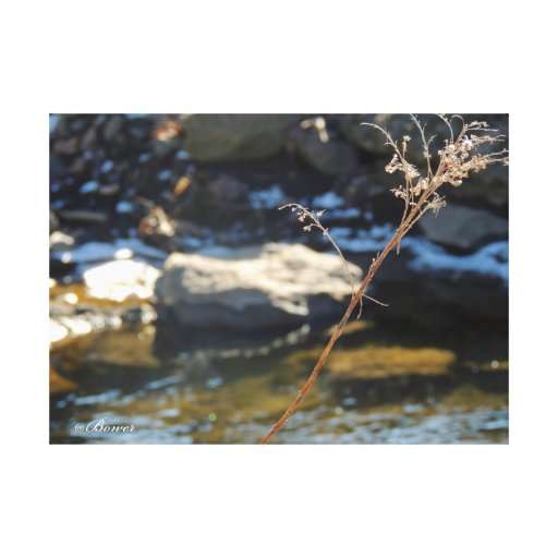 Nature Photogaphy Stretched Canvas Print