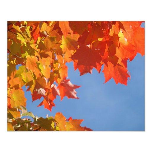 Nature Photography art prints Autumn Leaves Photo Print