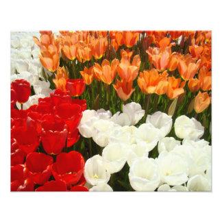Nature Photography art prints Tulip Flowers Floral Photograph