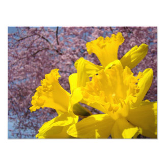 Nature Photography Daffodils Fine Art Prints Photograph