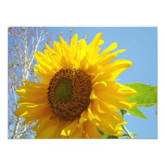 Nature Photography Fine Art Prints Sunflowers Photo Print