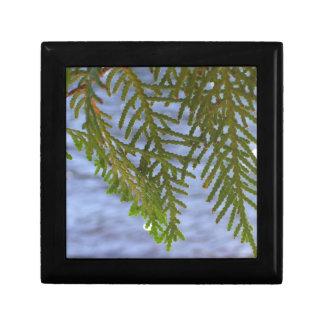Nature photography gift box