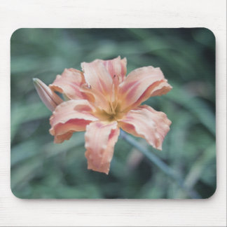 Nature Photography Peach Flower Mouse Pad