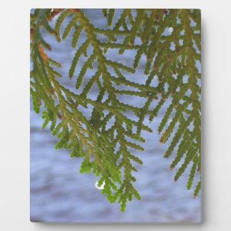 Nature photography plaque