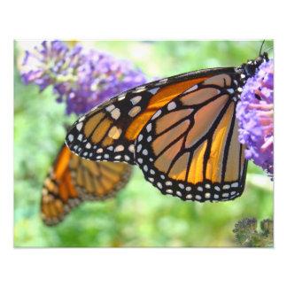 Nature Photography prints Monarch Butterflies Photograph