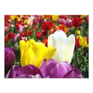 Nature Photography prints Tulip Flowers Garden Photo