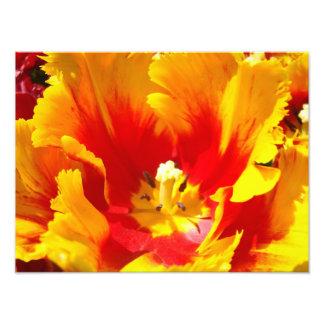 Nature Photography Red Yellow Fine Art Print Photo Art