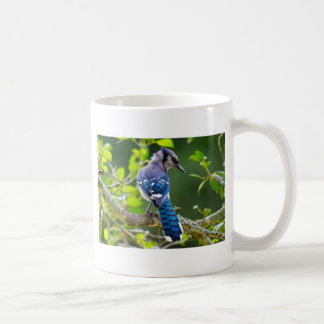 Nature Photography Shy Blue Jay Apparel Gifts Coffee Mug