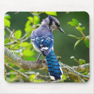 Nature Photography Shy Blue Jay Apparel Gifts Mouse Pad