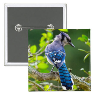 Nature Photography Shy Blue Jay Apparel Gifts Pinback Button
