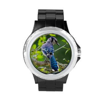 Nature Photography Shy Blue Jay Designer Watch