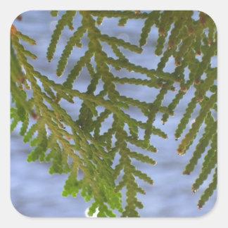 Nature photography square sticker