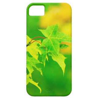 Nature Photography: Tender Green Maple Leaves iPhone SE/5/5s Case