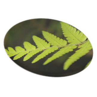Nature Plate, Fern Photography, Foodies gift Dinner Plate