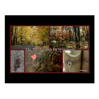 Nature Poster Northwoods Wisconsin Postcard