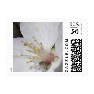 Nature's Inner Beauty Postage Stamps