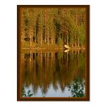Nature's Reflections custom postcard