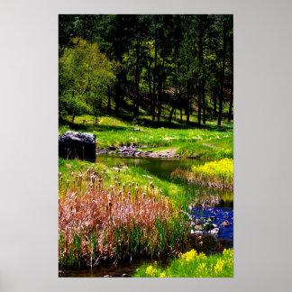 Nature Scene Poster