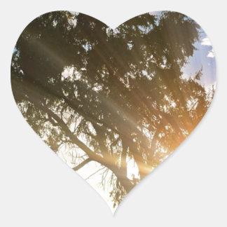 Nature scene, Sunset behind old tree 01 Heart Sticker