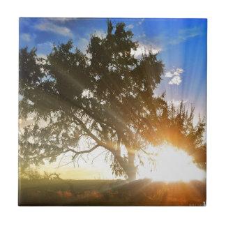 Nature scene, Sunset behind old tree 01 Tile