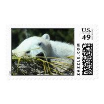 Nature Series Postage, Polar Bear Postage