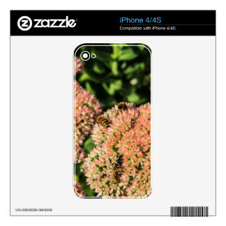 Nature Decal For The iPhone 4S
