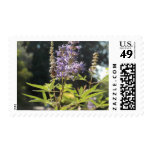 nature stamps