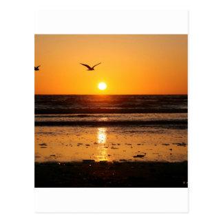 Nature Sunset Ocean Boulevard Postcard
