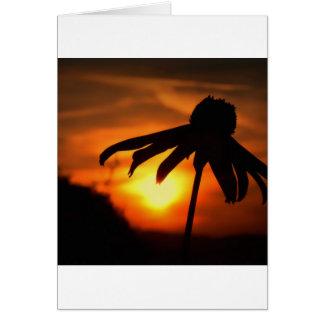 Nature Sunset Umberella Flower Card