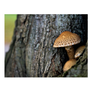 Nature Themed, Bumpy Brown Mushrooms Grow Out Of A Postcard