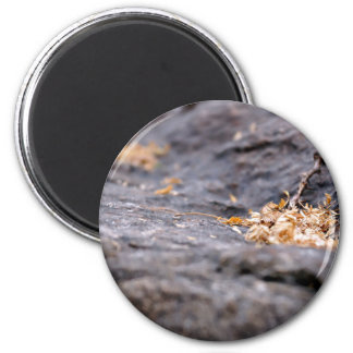 Nature Themed, Twigs And Dry Leaves On A Dark Rock Magnet