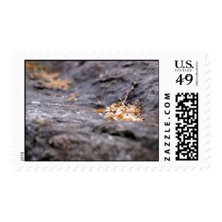 Nature Themed, Twigs And Dry Leaves On A Dark Rock Postage Stamp