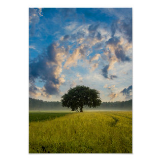 Nature Tree Green Grass Wild Blue Sky Summer Poster at Zazzle