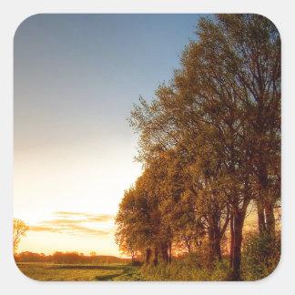 Nature Trees Farmland Night Light Square Sticker
