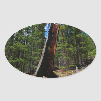 Nature Trees Hollow Caber Oval Sticker