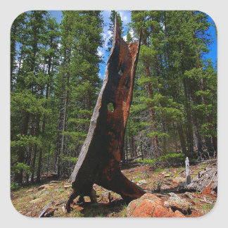 Nature Trees Hollow Caber Square Sticker