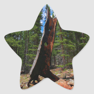Nature Trees Hollow Caber Star Sticker