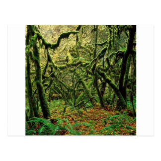 Nature Trees Mossy Times Post Cards